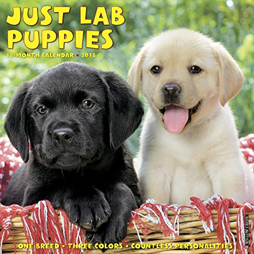 Just Lab Puppies 2018 Calendar (Animals Lab)