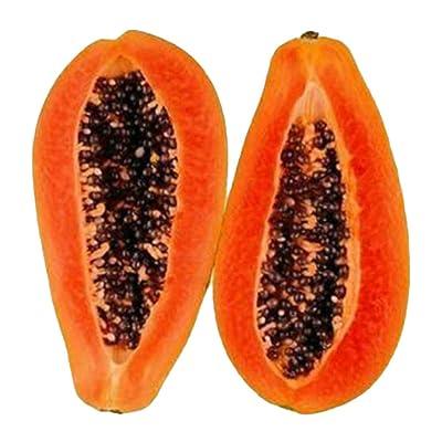 BLagenertJ Dwarf Papaya Delicious Sweet Fruit Seeds for Home Garden Fruit Farm Field Plant - 100 Pcs 100 Pcs : Garden & Outdoor