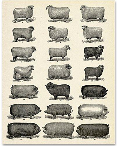Farm Animals - 11x14 Unframed Art Print - Great Home Decor