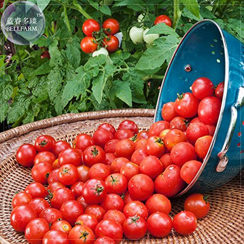 - 2018 Hot Sale Husky Cherry Red Tomato Seeds