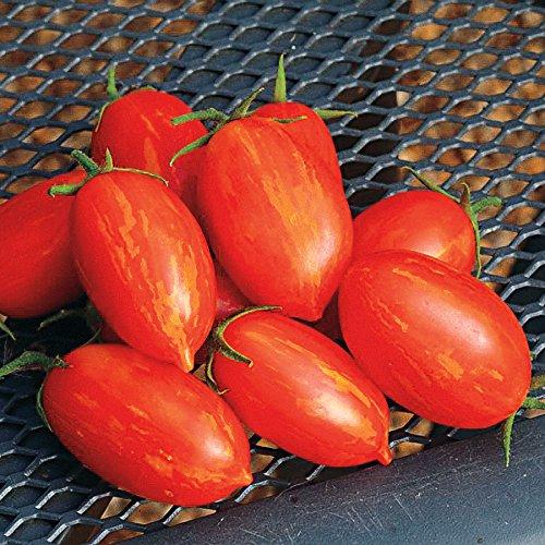 Park Seed Firecracker Hybrid Tomato -
