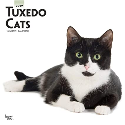 Calendario de pared para gatos Tuxedo, razas de gatos por calendarios: Amazon.es: Oficina y papelería