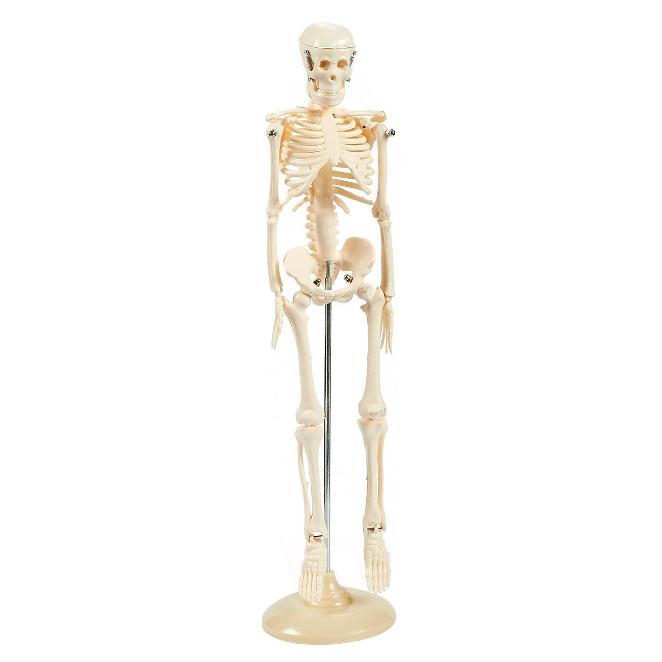 Human Skeleton Model - 17.5-Inch - Miniature Anatomical Skeleton for Tabletops, Base Mounted, Articulating, Ivory, 4 x 17.5 x 4 Inches Juvale