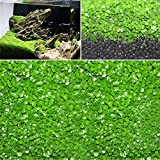 Gigicloud Aquarium Plant Seeds, Easy to Grow
