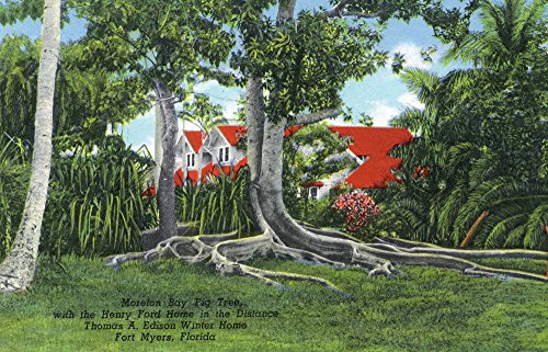 - Fort Myers, Florida - T. Edison Winter Home; View of Moreton Bay Fig Tree and Ford House (16x24 SIGNED Print Master Giclee Print w/Certificate of Authenticity - Wall Decor Travel Poster)