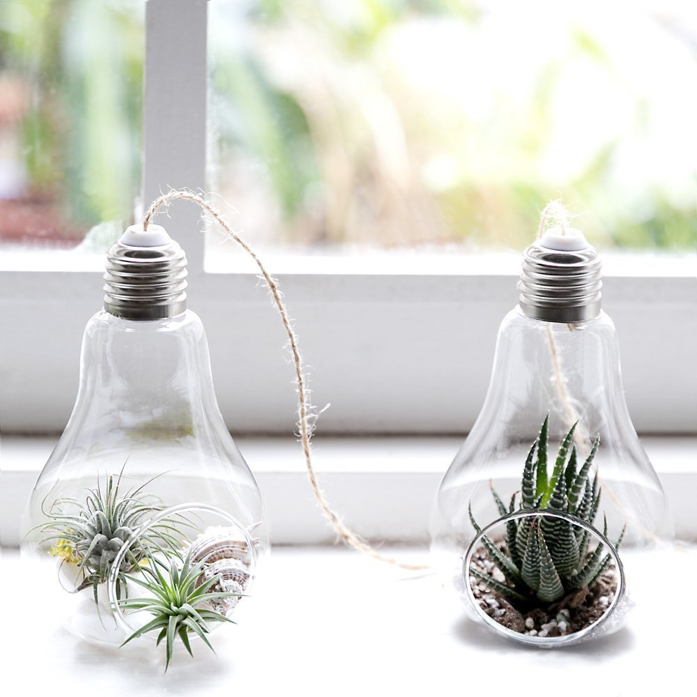 Mkouo Maceta colgar Bombillas de dise/ño cristal para plantas crasas//bromelie 3 unidades