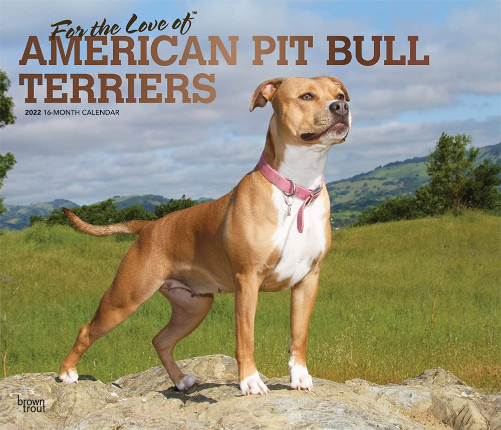 For the Love of American Pit Bull Terriers 2022 14 x 12 Inch Monthly Deluxe Wall Calendar