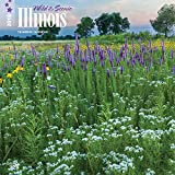 Illinois, Wild & Scenic 2018 12 x 12 Inch Monthly Square Wall Calendar, USA United States of America Midwest State Nature (Multilingual Edition)