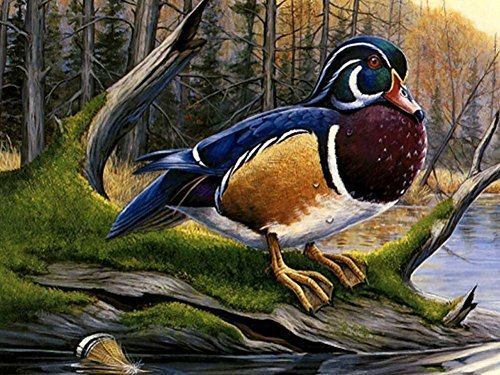Colorful Wood Duck F1 -Oil Painting On Canvas Modern Wall Art Pictures For Home Decoration Wooden Framed (12X16 Inch, Framed) ()