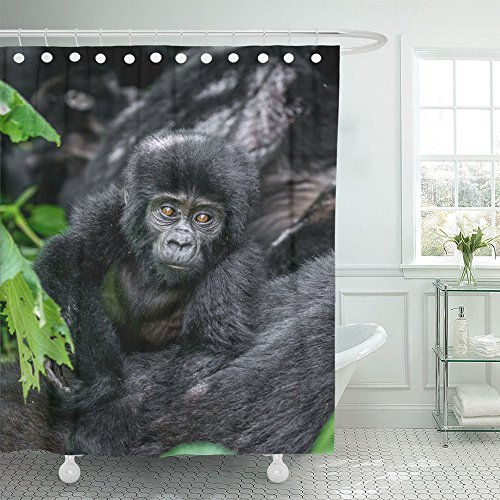Emvency Shower Curtains 66x72 Landscape Print Portrait of the Baby Mountain Gorilla Uganda Bwindi Impenetrable Forest National Park Excellent Waterproof Polyester Solid Grommet With 12 Hooks