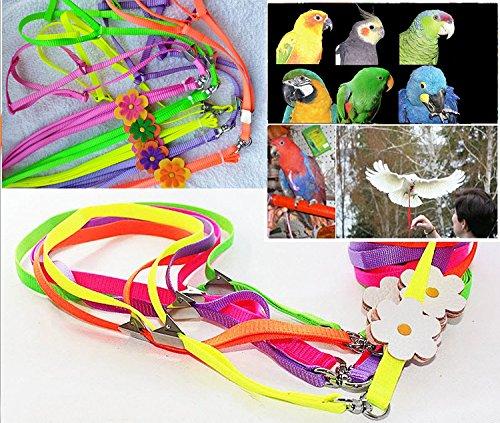 Beauty Parrot Adjustable Bird Harness and Leash Anti-bite for Bird Parrot African Grey Cockatoo Macaw Ringneck for Medium Size Bird (1Pcs Random Color)]()