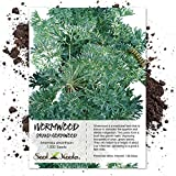 500 Seeds, Wormwood (Artemisis absinthium) Seeds by Seed Needs