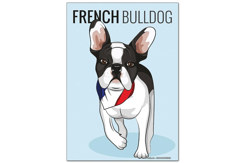 Iman Nevera Perro bulldog francés: Amazon.es: Hogar