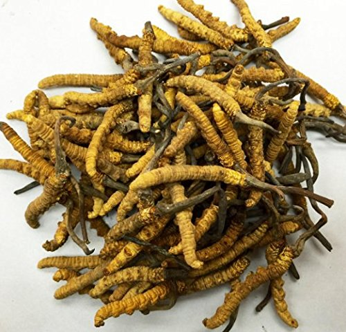 [TOP Quality Asian Greenhouses Kitchen Tibet Caterpillar Fungus,5gm] (Guy Dance Costumes)