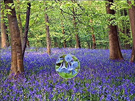 Awe Inspiring A4 Size Bluebell Birthday Cake Toppers Decorations On Edible Rice Funny Birthday Cards Online Alyptdamsfinfo