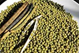 100 Seeds Organic Mung Bean (Green) Also Known As Chori, for Spouting , Food or Growing