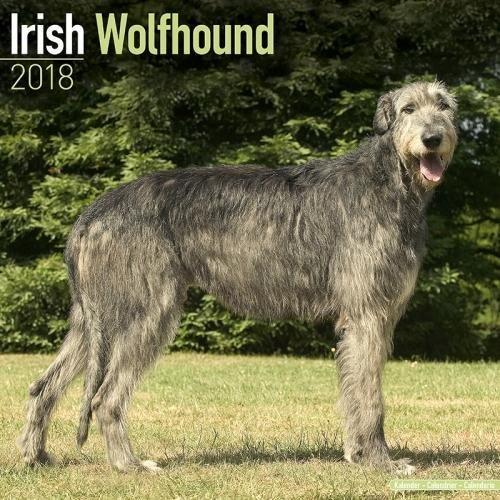 Irish Wolfhound Calendar - Dog Breed Calendars - 2017 - 2018 wall Calendars - 16 Month by Avonside