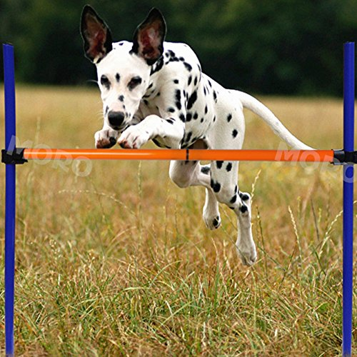 ZOIC Pet Dogs Outdoor Games Agility Exercise Training Equipment - Jump Hurdle bar Obedience Show Training For Doggie (Equipment Dog Agility Used)