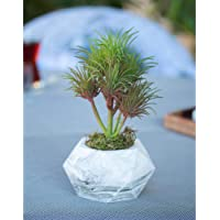 Mermer Saksıda Vegas Kaktüs Yapay Bitki