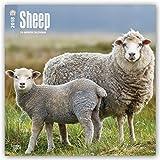 Sheep 2018 12 x 12 Inch Monthly Square Wall Calendar, Wildlife Domestic Farm Animals (Multilingual Edition)