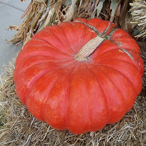 Pumpkin Seed Packet - Pumpkin Seeds - Cinderella - Packet, Vegetable Seeds