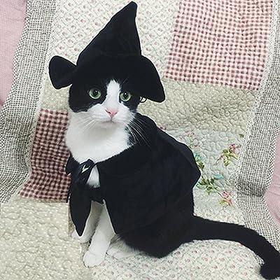 Disfraz de bruja o mago con sombrero y capa para gatos y perros ...