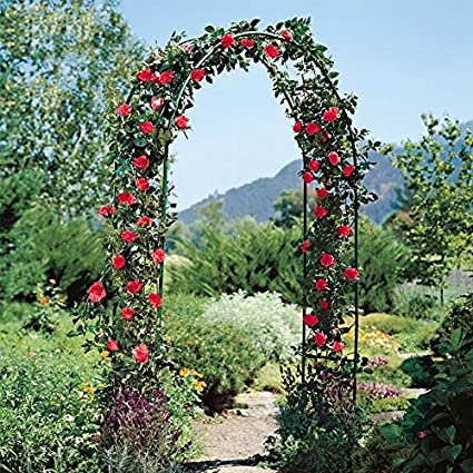 Qulista Arca de Jardín Romántico Ideal para Plantas trepadoras Doble Celosía de Metal Negro Ligero, Adorno Creatif para Boda Buffet Fiesta, Negro: Amazon.es: Jardín