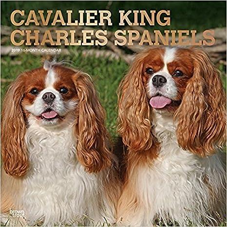 Amazon.com : 2019 CAVALIER KING CHARLES WALL CALENDAR WITH ...
