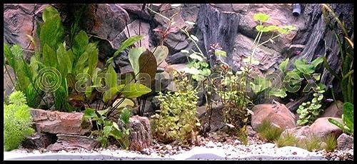 Aquariumimpex-3D-Aquarienrückwand