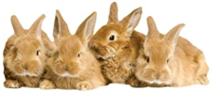 """Paper House Productions 3.75"""" x 1.75"""" Die-Cut Sweet Bunnies Shaped Magnet for Refrigerators and Lockers"""