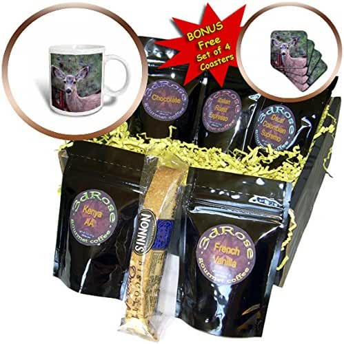 3dRose Jos Fauxtographee- Deer - A deer facing toward the camera with allot of detail - Coffee Gift Baskets - Coffee Gift Basket (cgb_255888_1)