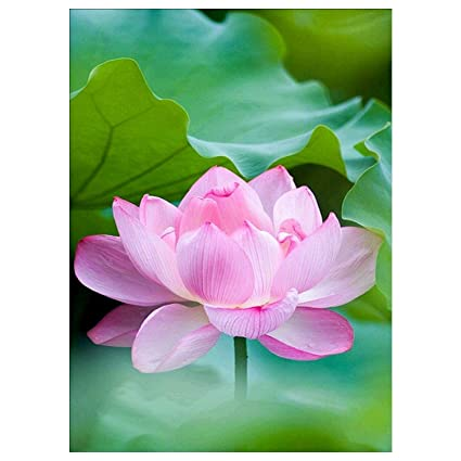 Amazoncom Diy 5d Diamond Painting By Number Kit Lotus Flower