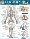 Circulatory System Advanced (Quick Study: Academic) by Inc. BarCharts (2013-07-31)