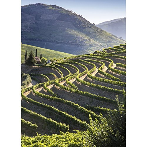 Vine Hill Winery - 6