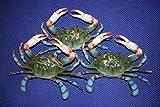 Crabshack Restaurant Realistic Crab Display Decor, 6 inches, Set of 3