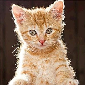 Diamond Painting Set Katze Baby Orange Katze 5d Diamant Painting