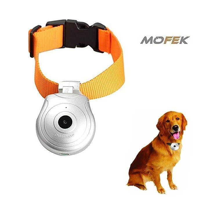 mofek cuello cámara de vídeo de mascota Perro Gato collares Digital 8 GB memoria DV DVR grabador: Amazon.es: Productos para mascotas