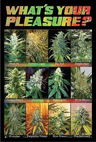 buyartforless Framed What'S Your Pleasure Cannabis Marijuana Chart
