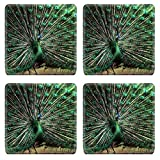 Luxlady Square Coasters Non-Slip Natural Rubber Desk Coasters IMAGE ID: 38131342 Wild Peacock peacock in Indonesia