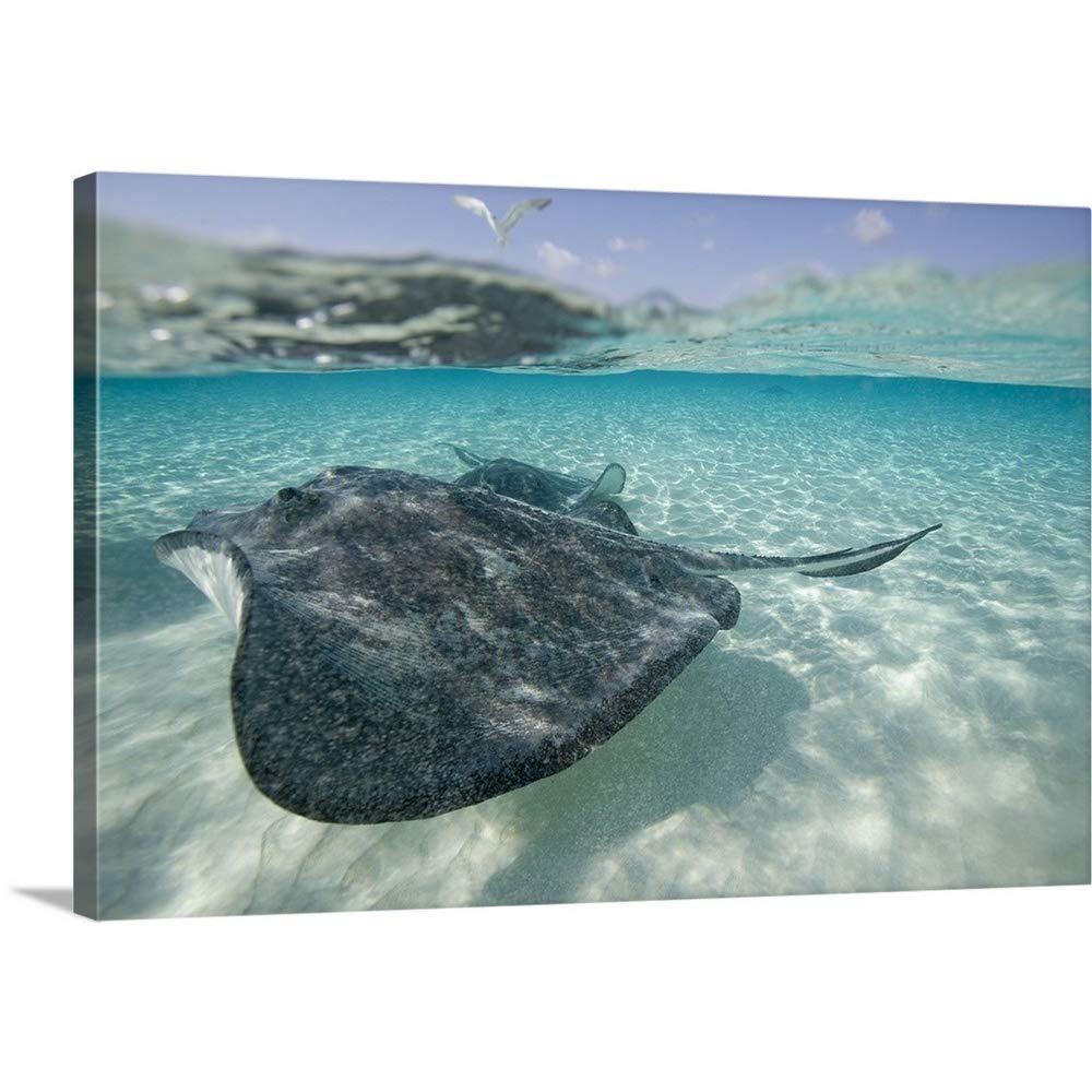 ポールSoudersプレミアムthick-wrapキャンバス壁アート印刷ケイマン諸島、グランドケイマン島、南StingrayというタイトルのShallow Water 48