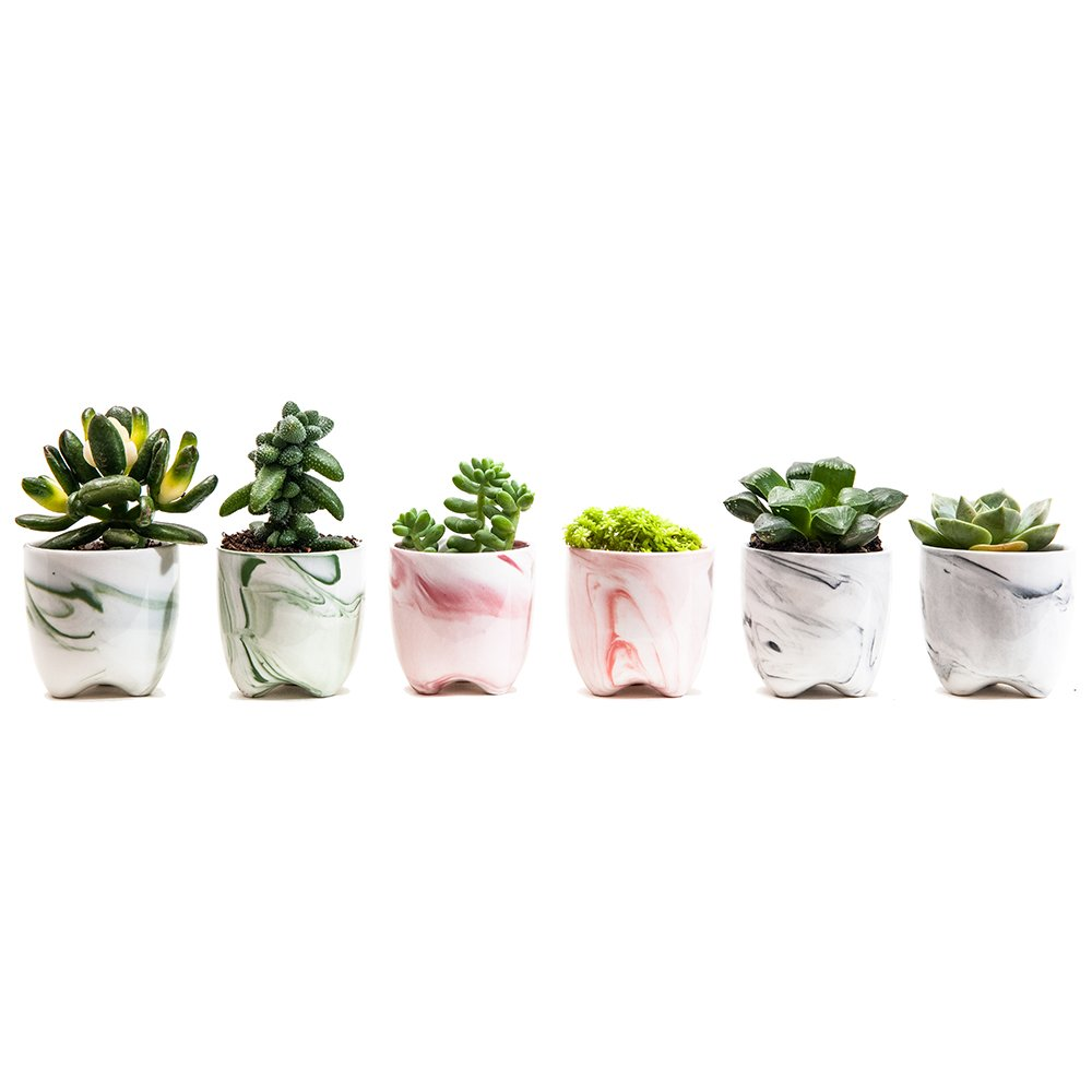 Sun E 2.36 Inch Modern Simplism Style Container Bonsai Planters Ceramic Abstract Flow Glaze Base Serial Set Succulent Planter Pot Cactus Plant Pot Flower Pot With Hole (6 In Set) by Sun E