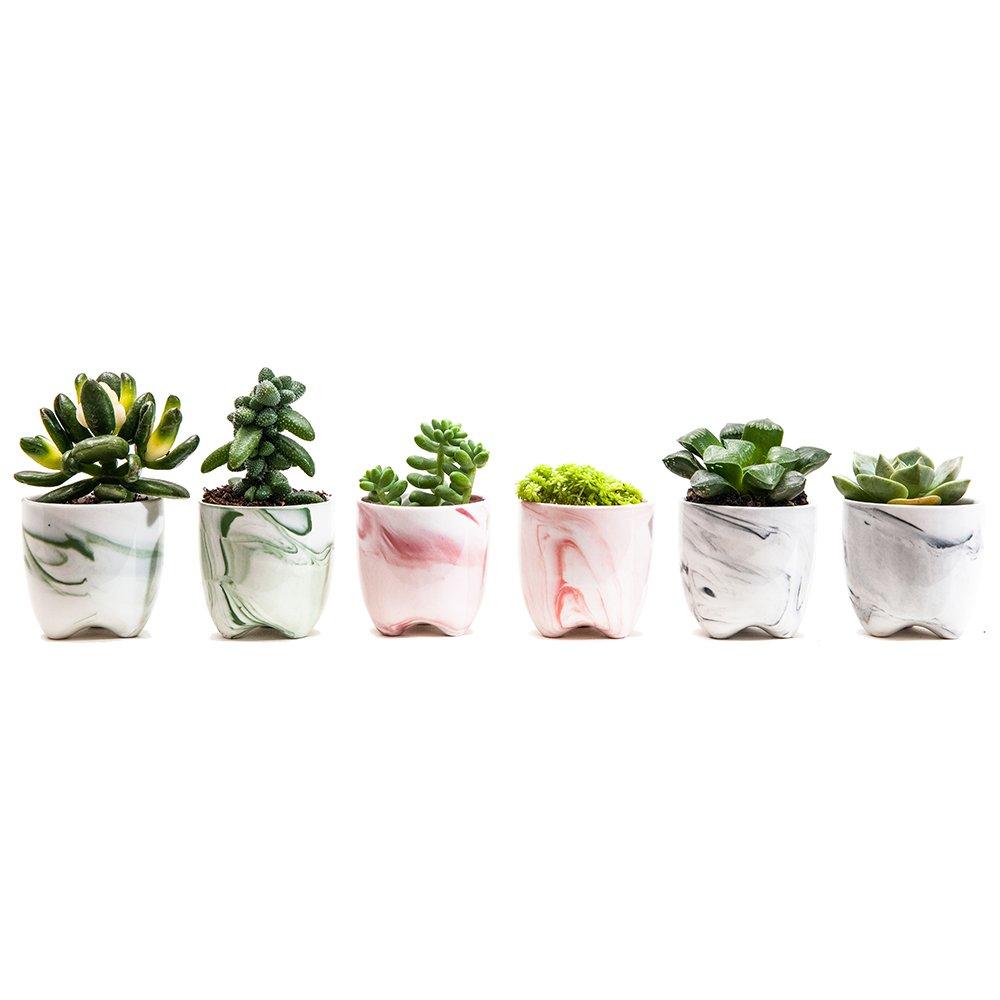 SUN-E 2.36 Inch Modern Simplism Style Container Bonsai Planters Ceramic Abstract Flow Glaze Base Serial Set Succulent Planter Pot Cactus Plant Pot Flower Pot With Hole (6 In Set)