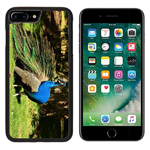 Show Off Peacock - MSD Premium Apple iPhone 7 Plus Aluminum Backplate Bumper Snap Case iPhone7 Plus IMAGE ID 36564499 Male peacock shows off its beauty in the park