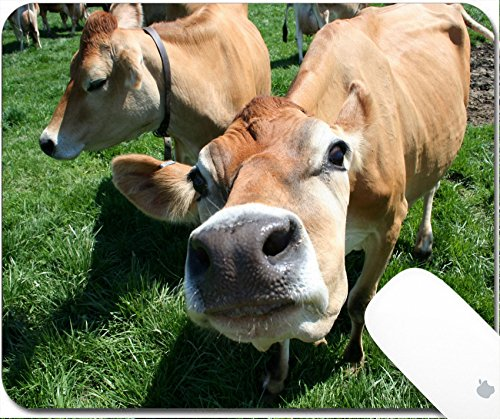Luxlady Gaming Mousepad 9.25in X 7.25in IMAGE: 449913 A beautiful female Jersey cow in pasture exploring the camera
