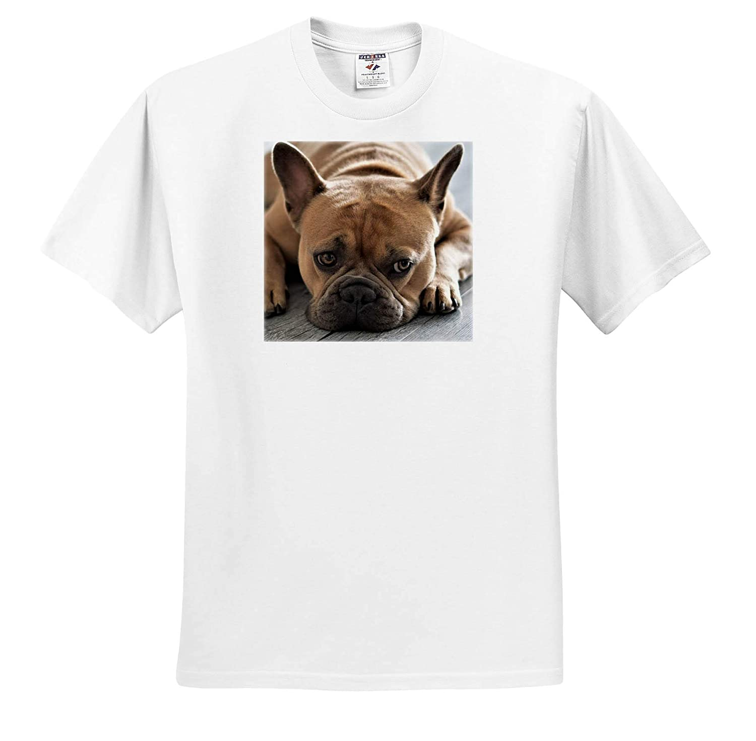 3dRose Sven Herkenrath Dog Funny Eyes of a French Bulldog Frenchie Doglover Doggy Pet ts/_320112 Adult T-Shirt XL