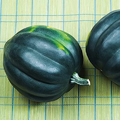 Honey Bear Hybrid Winter Squash Garden Seeds - Non-GMO - Vegetable Gardening Seed
