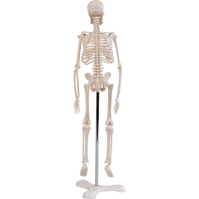 Tolle Gesichts Skelett Anatomie Fotos - Anatomie Ideen - finotti.info