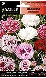 Semillas de Flores - Clavel China Doble Flor grande variado - Batlle