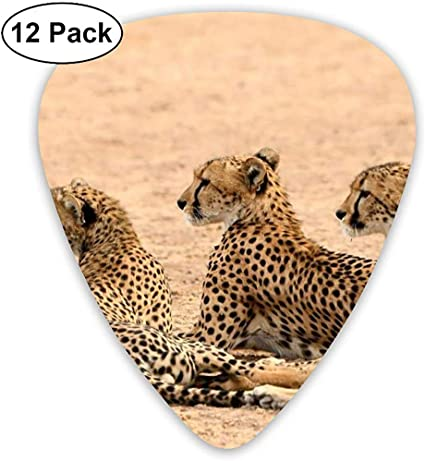 Set de tres púas de guitarra de leopardo 12 púas de ukelele, que ...