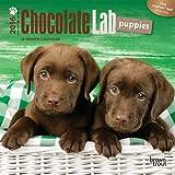 Labrador Retriever Puppies, Chocolate 2016 Mini 7x7 (Multilingual Edition)